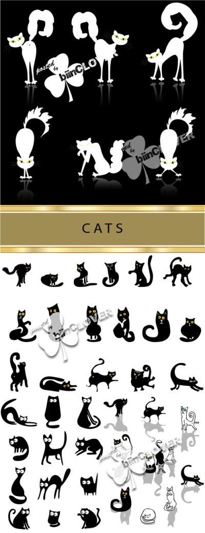 Cats 0026